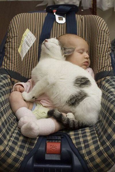 Cats In Room With Sleeping Baby