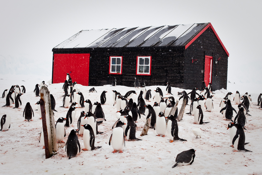 Penguins at Port Locroy.