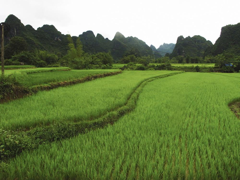 GGTR_Vietnam103.jpg