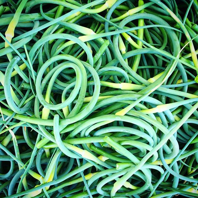 #scapes #vermontveggies #farmstand #opendaily8to8