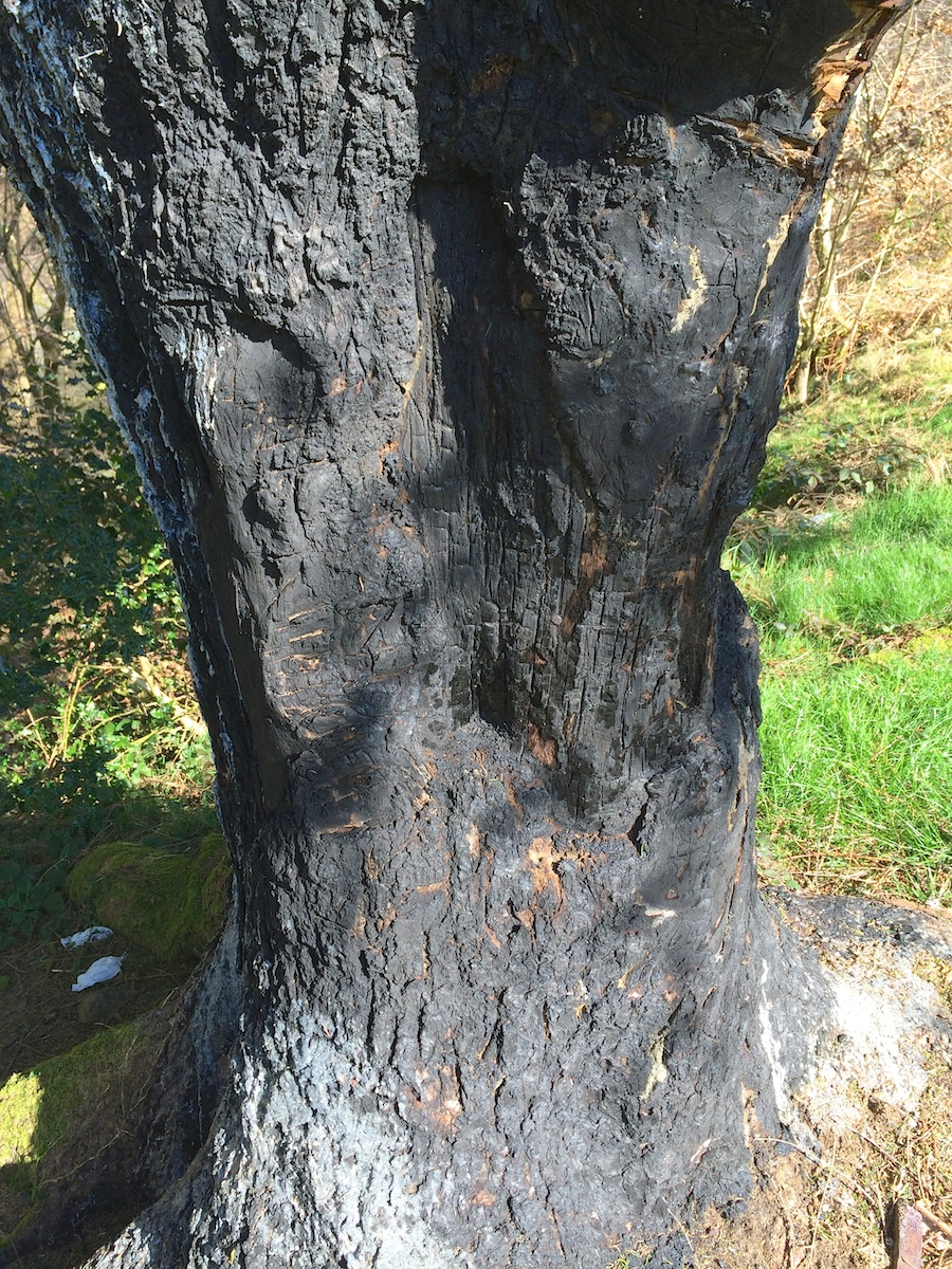 why do this? the tree is bleeding sap, healing