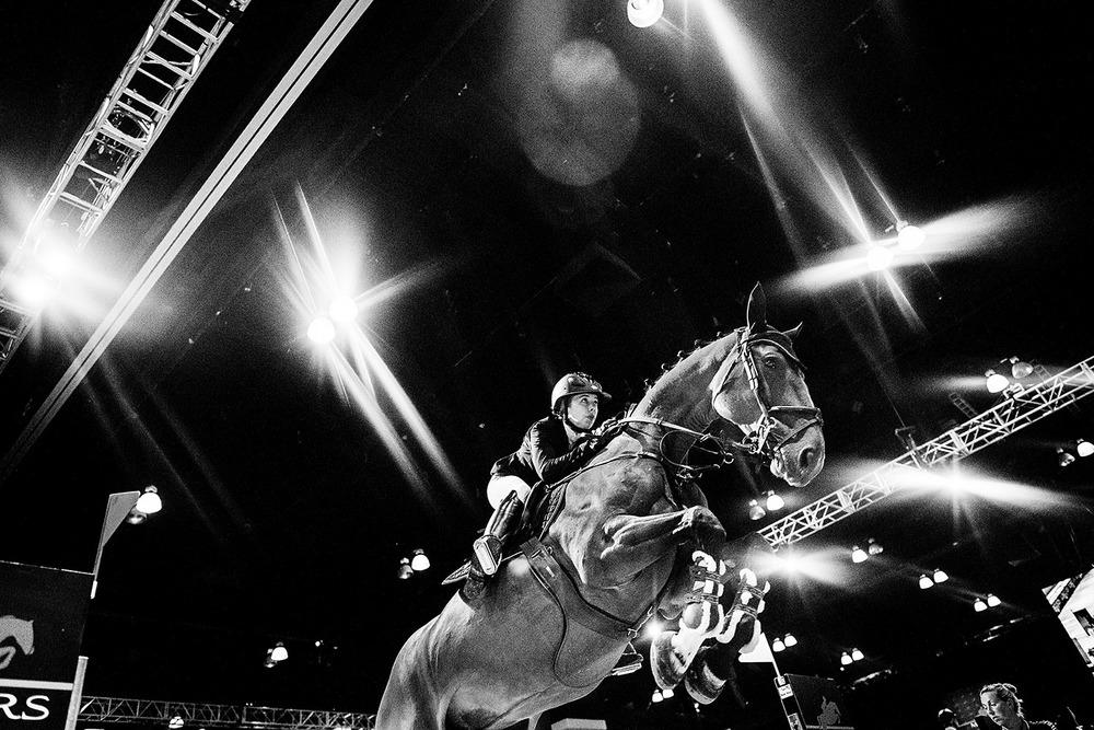 HorseWeb_015.JPG