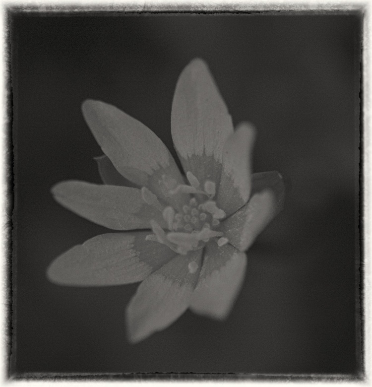 The Beginning Of Spring Gary Reed Photomedia