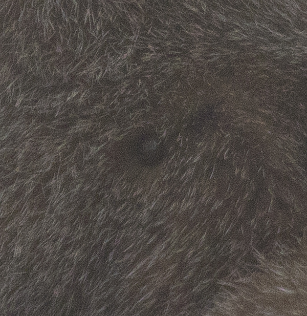 Bobcat-Tick.jpg