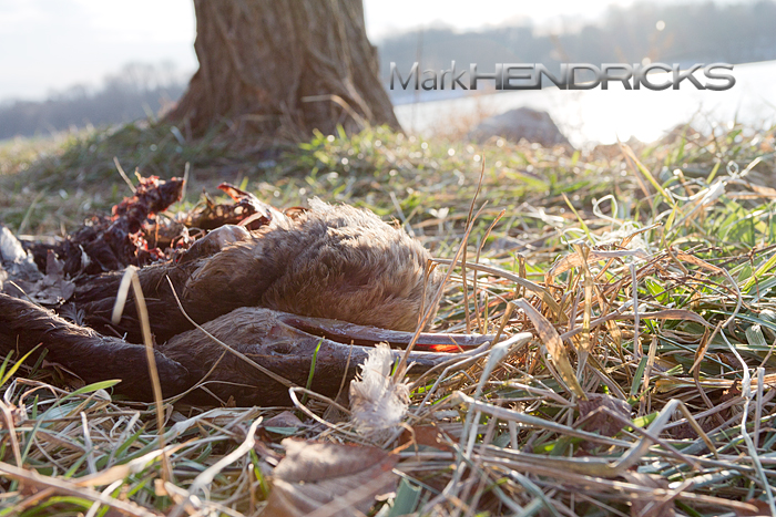 cormorant2.jpg