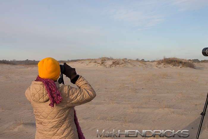 Mom viewing a Snowy Owl on Assateague Island