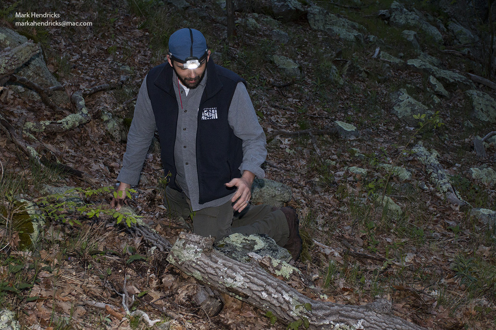A researcher surveys for Shenandoah salamanders underneath logs and rocks