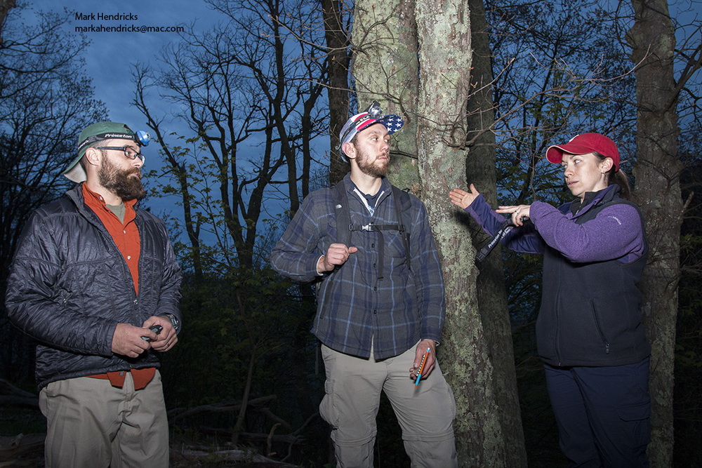 Researchers discuss the night survey methodology for Shenandoah salamanders with staff