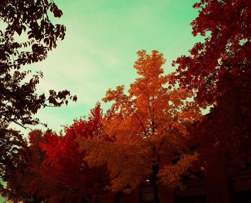 Vintage | 365 Project | Nov 2, 2012