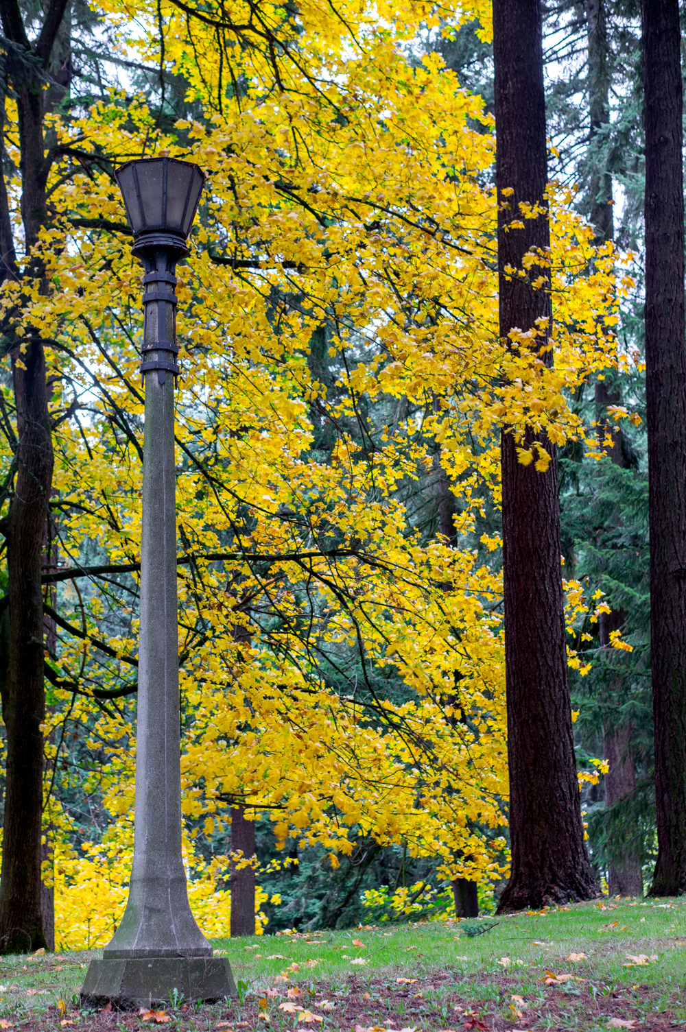Lamp Post | 365 Project | Nov 4th, 2012