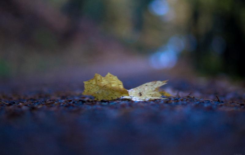 Backroad Leaf | 365 Project | Nov 23rd, 2012