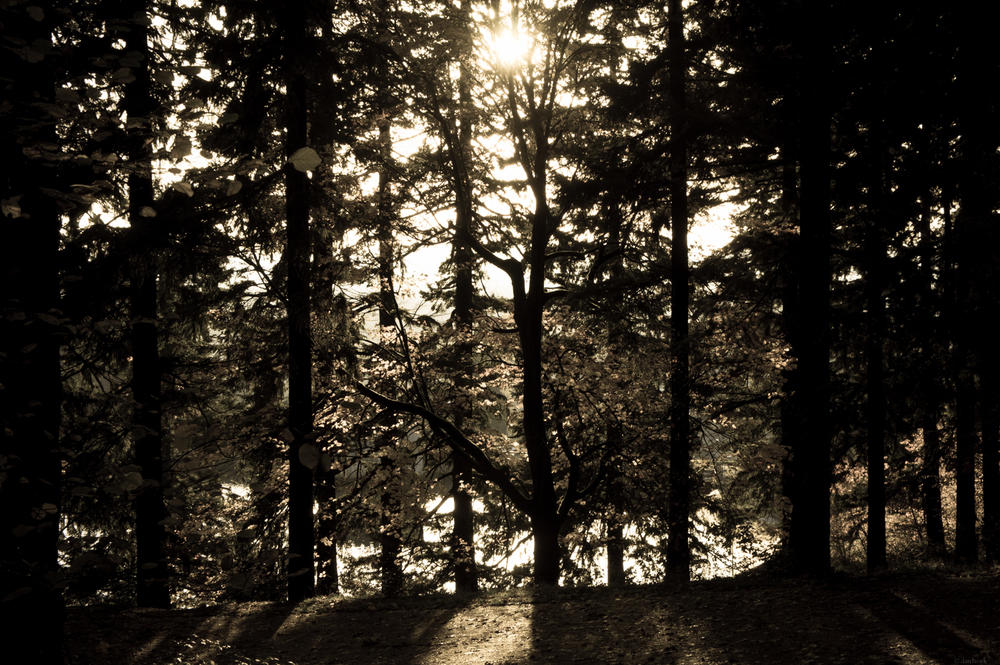 Forested | 365 Project | Nov 25th, 2012