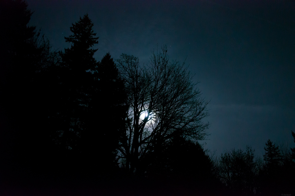 Moonlit | 365 Project | Nov 26th 2012