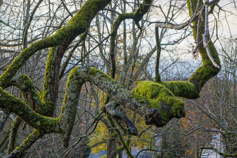 Twisty | 365 Project | Nov 29th, 2012