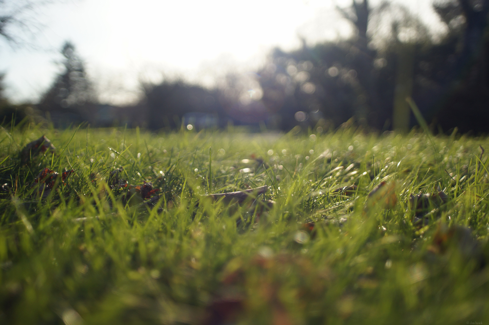 Cold Grass | 365 Project | Jan 1, 2012