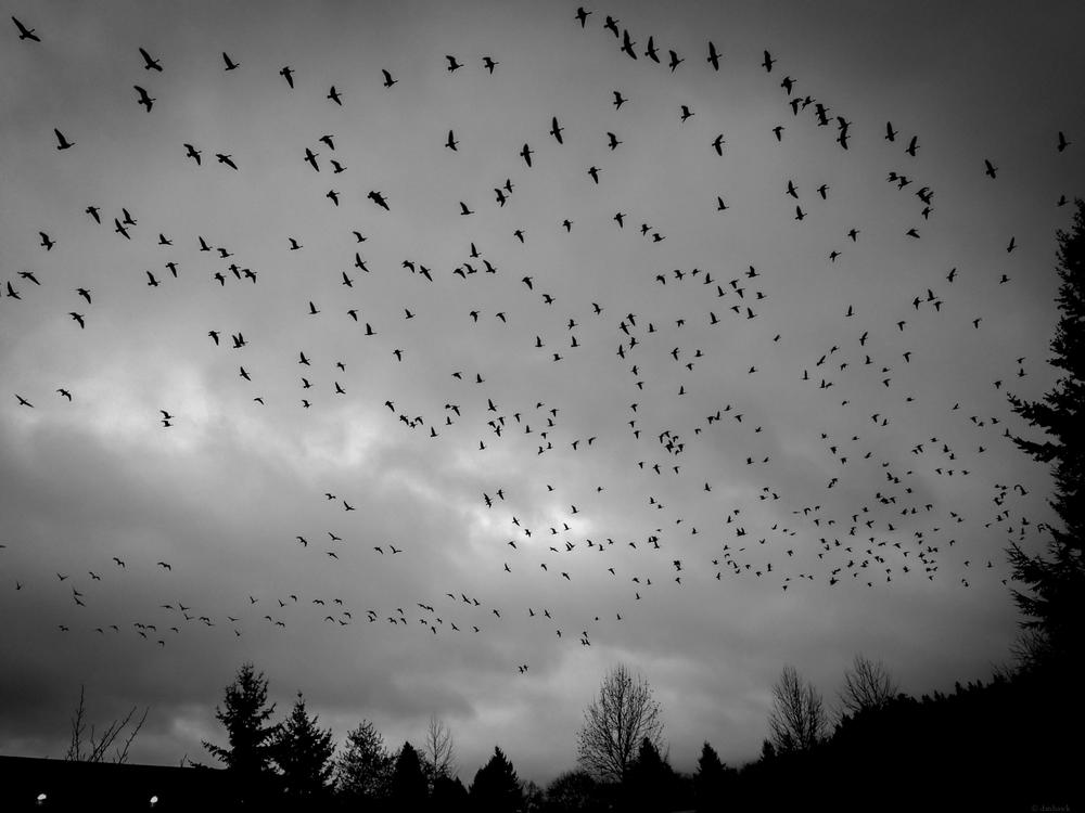Birds | 365 Project | Jan 8th, 2013