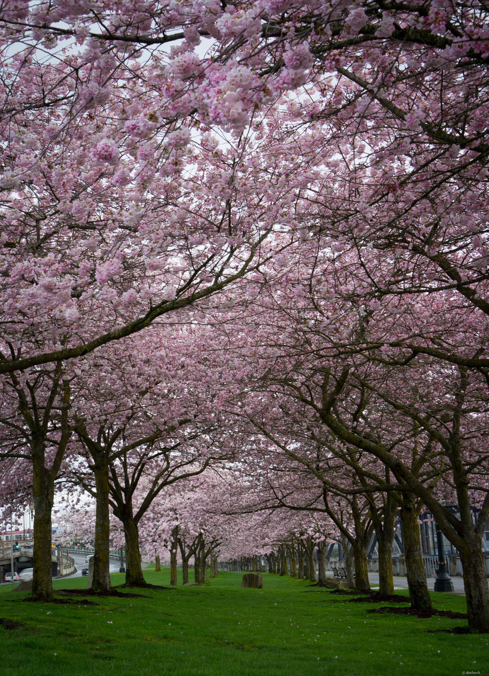 Cherry Blossom Canopy | 35mm, f/8, ISO 100, 1/10