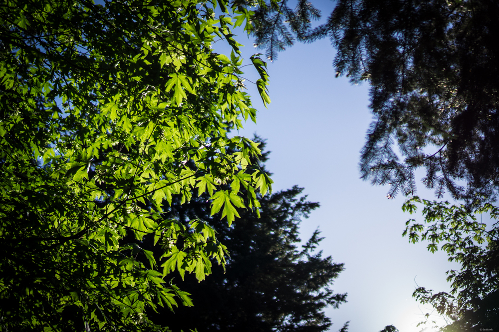 Green and Blue | 365 Project | May 6th, 2013 | 35mm, f/1.8, ISO 100, 1/4000