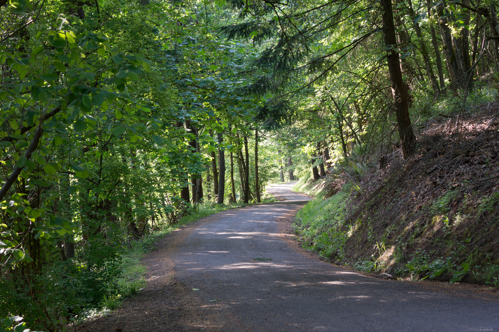 Mt Tabor Road | 365 Project | May 14th, 2013 | 35mm, f/4, ISO 100, 1/25, Sony NEX 7