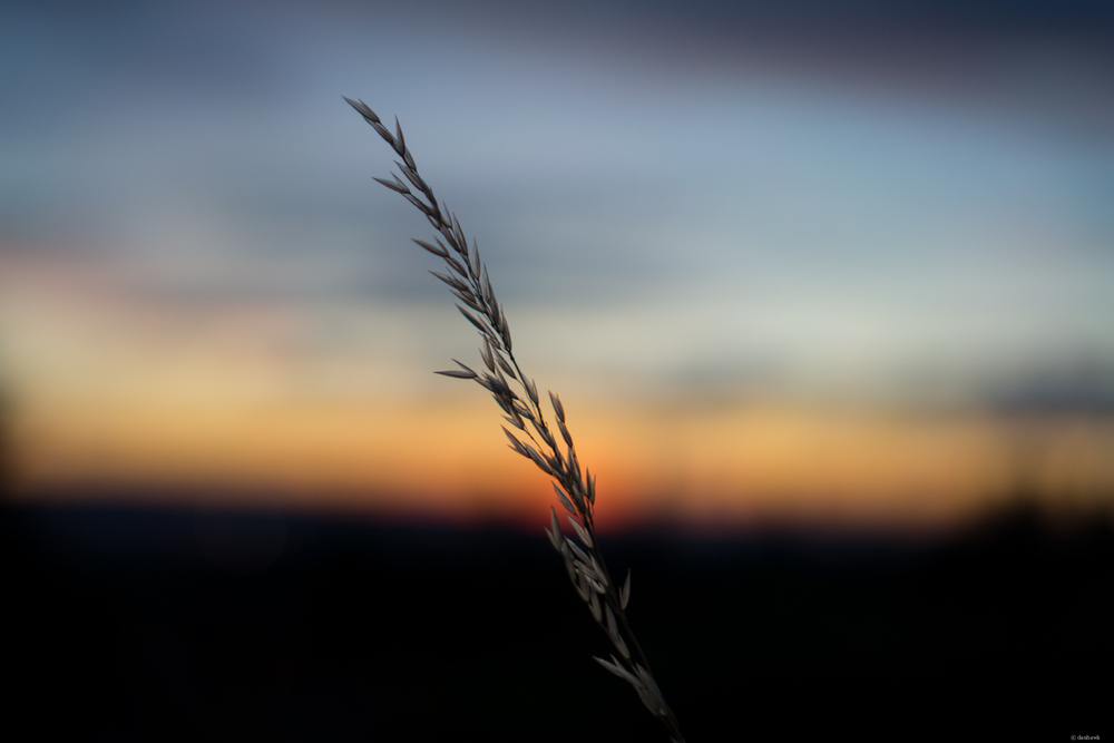 Sunset Grass Seed | 365 Project | July 30th, 2013 | 35mm, f/1.8, ISO 100, 1/50  Downloads |  Desktop  |  iPad  |  iPhone