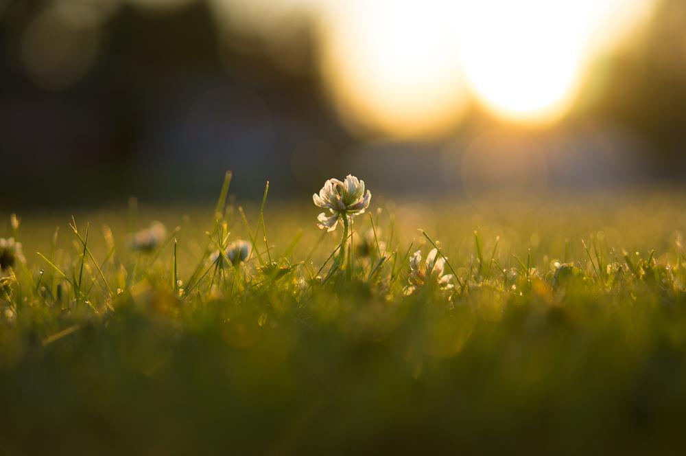 Clover Sunrise.jpg