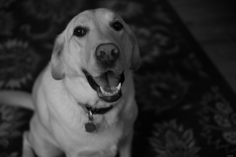 Happy Dog | 365 Project | August 18th, 2013 | 35mm, f/1.8, ISO 400, 1.50