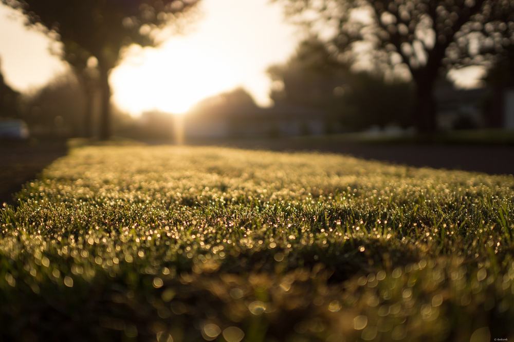 Like Dew Covered Carpet | 24mm, f/1.8, ISO 100, 1/2500