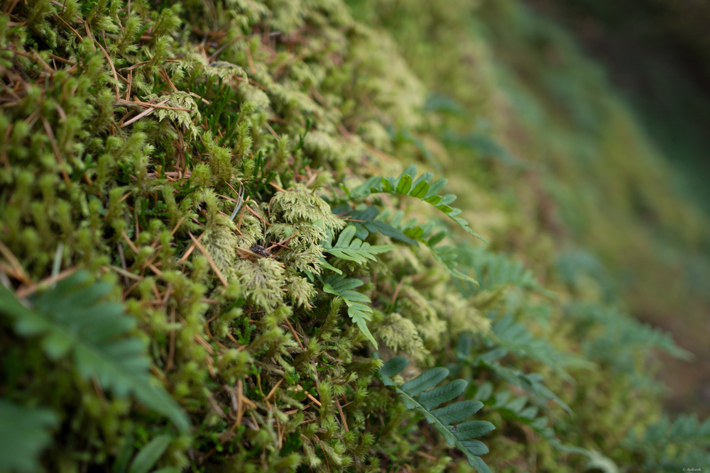 Mossy ferns.jpg