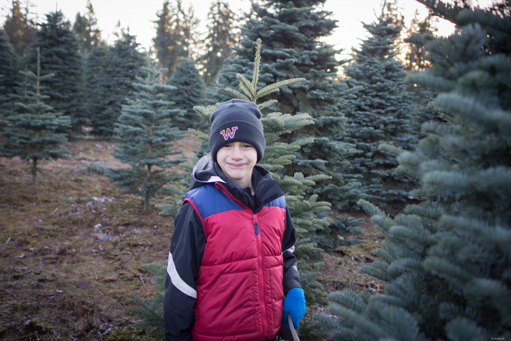 Gavin Christmas trees.jpg