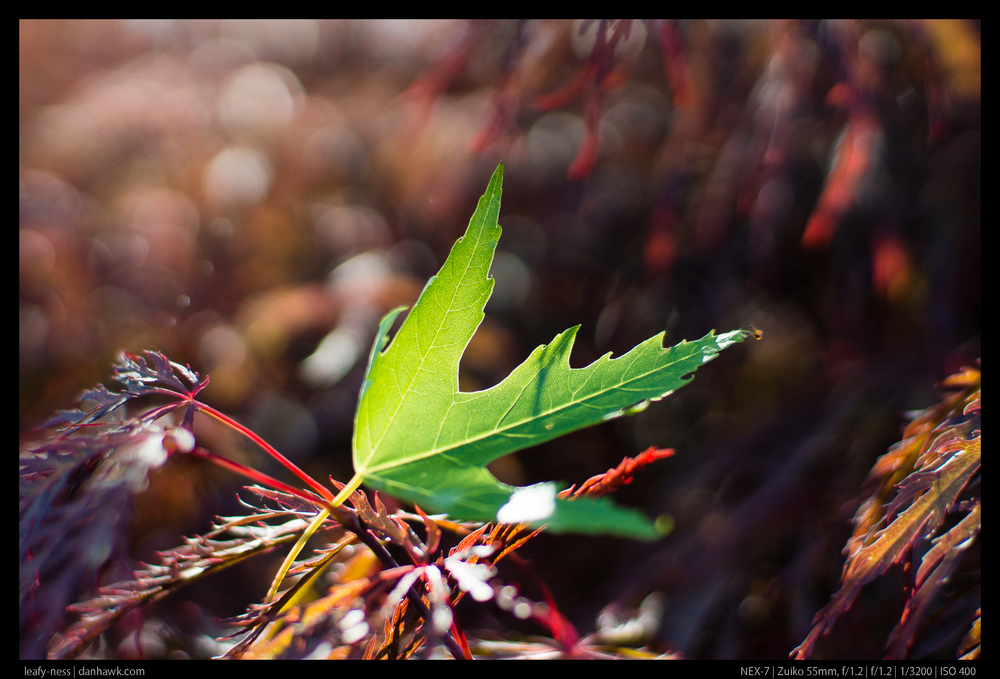 leafy-ness