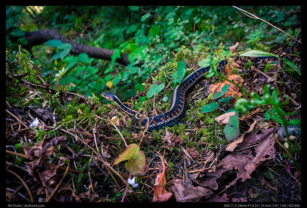 4th Snake