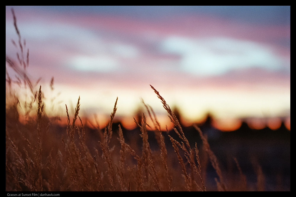Grasses at Sunset Film