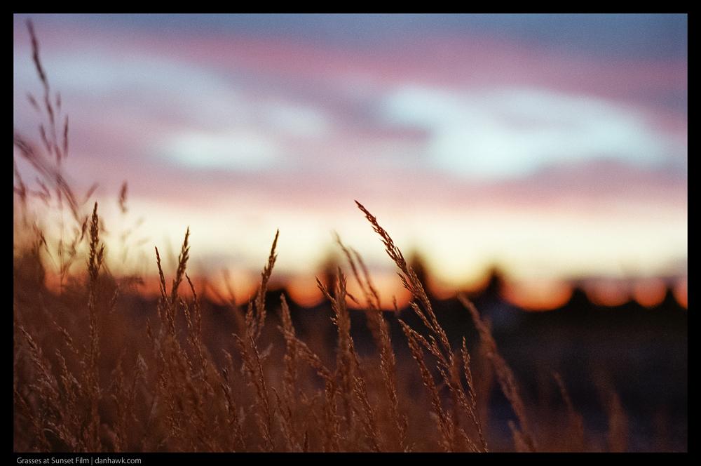 Grasses at Sunset Film