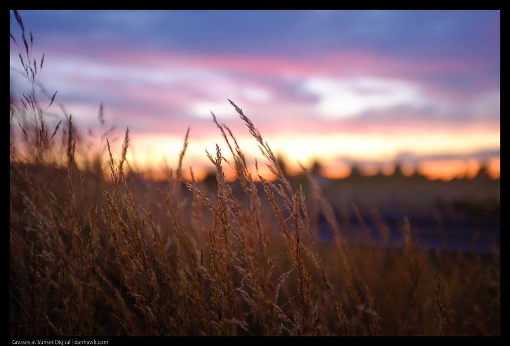 Grasses at Sunset Digital