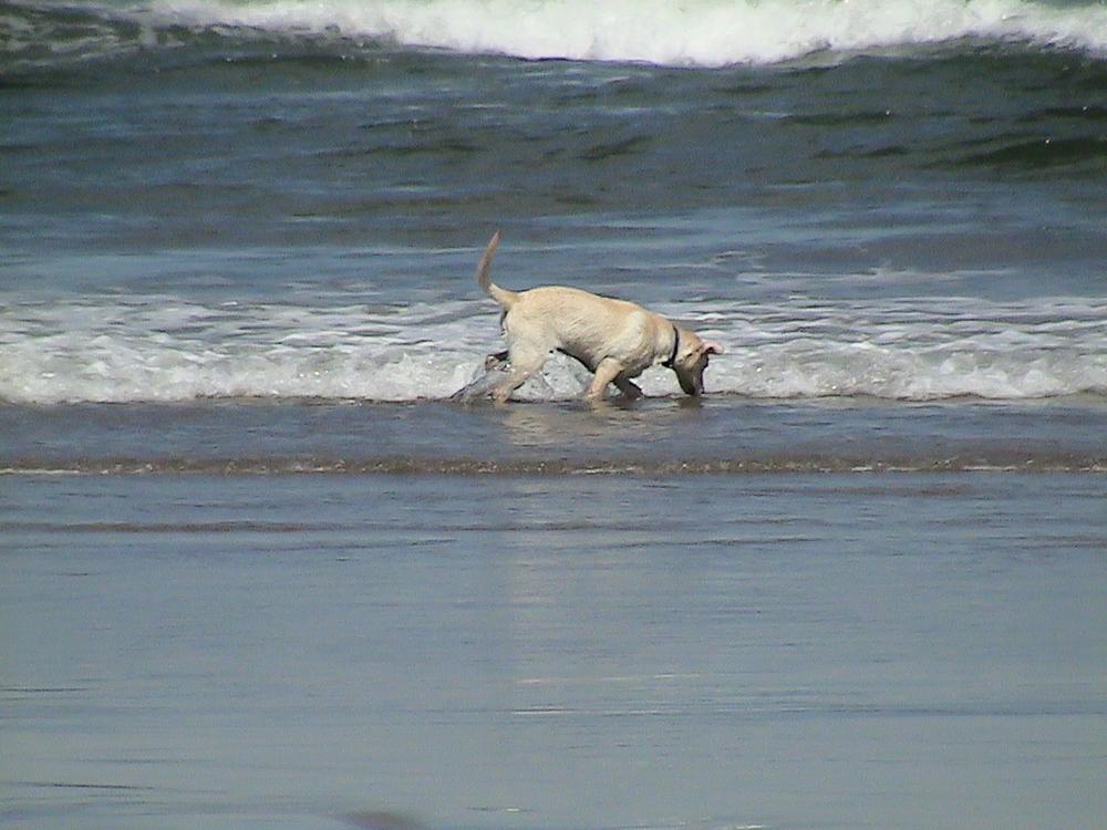 Beach Puppy.jpg