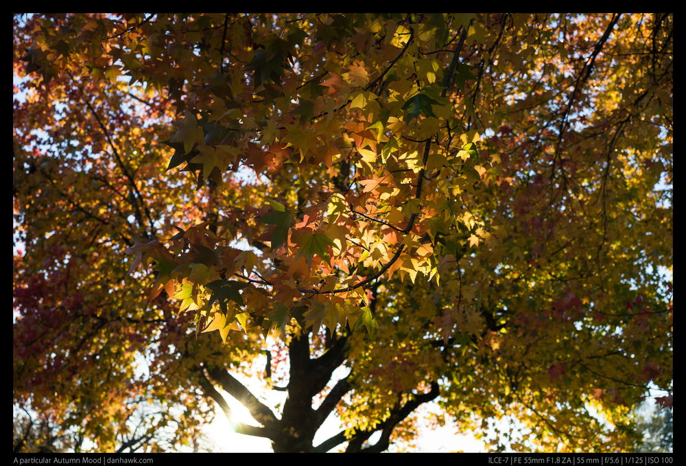 A particular Autumn Mood