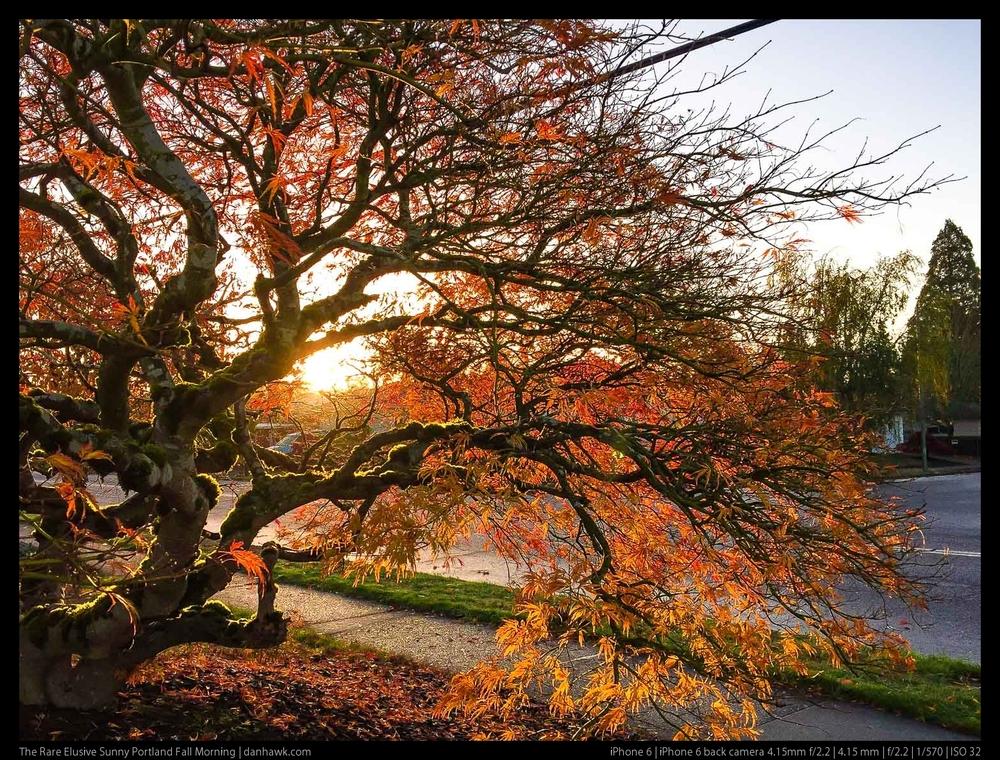 The Rare Elusive Sunny Portland Fall Morning