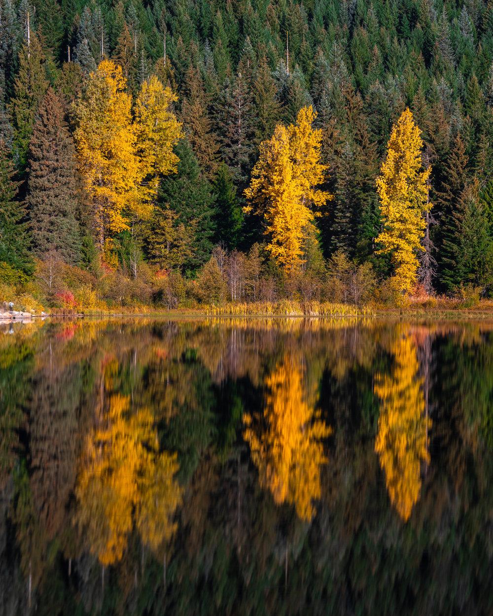 Trillium Autumn detail.jpg