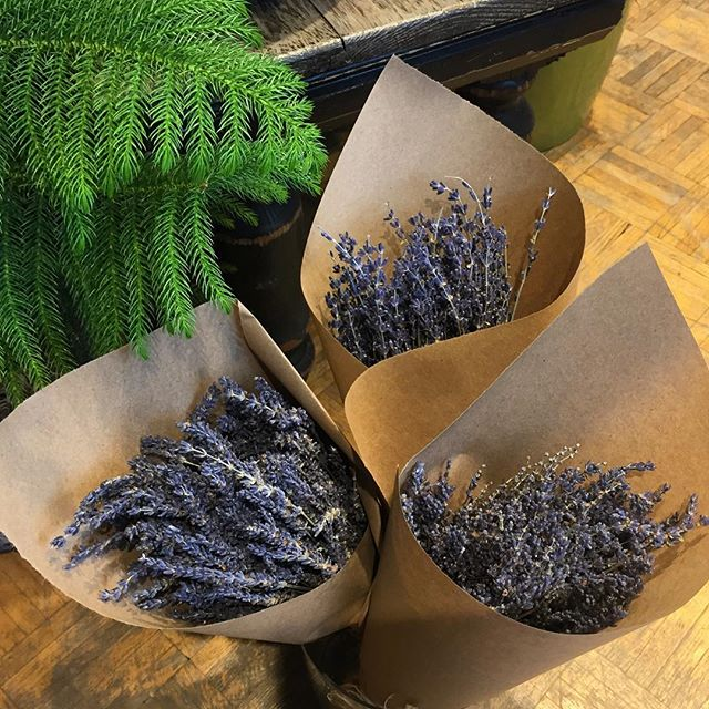 Dried #Lavender bunches now in stock! Drop in quick before they disappear! 👻💜 #aromatherapy #calm #chic #decor #ecofriendly #fragrance #green #herbs #home #lavendula #locallygrown #natural #romantic #style #sustainable #torontoflorist