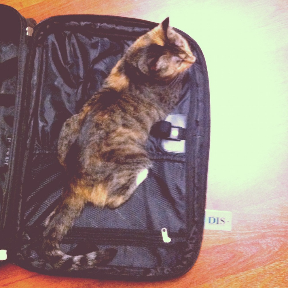 someone wants to stow away in my suitcase. if only I could take her!