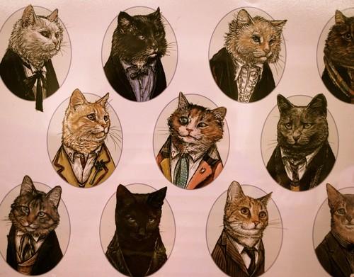 cat portraits.jpg