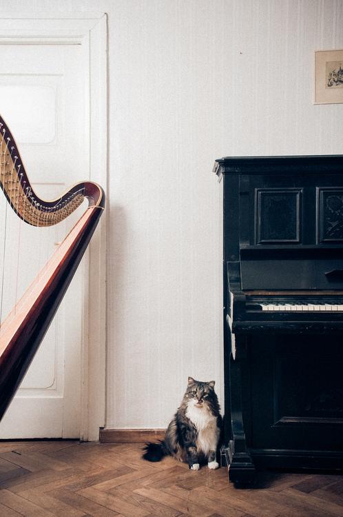 cat and harp.jpg