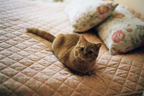 on mattress.jpg