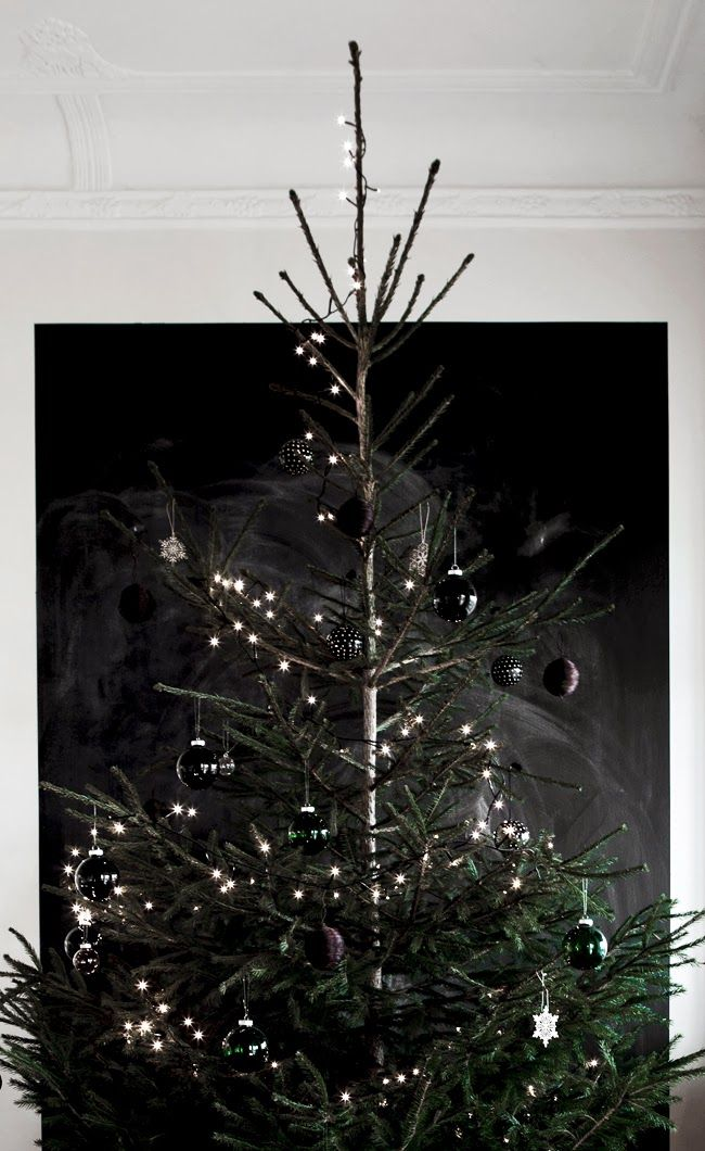 tree and lights.jpg