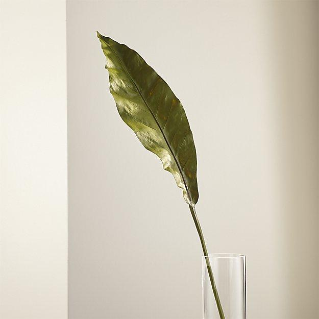 taca-orchid-leaf.jpg