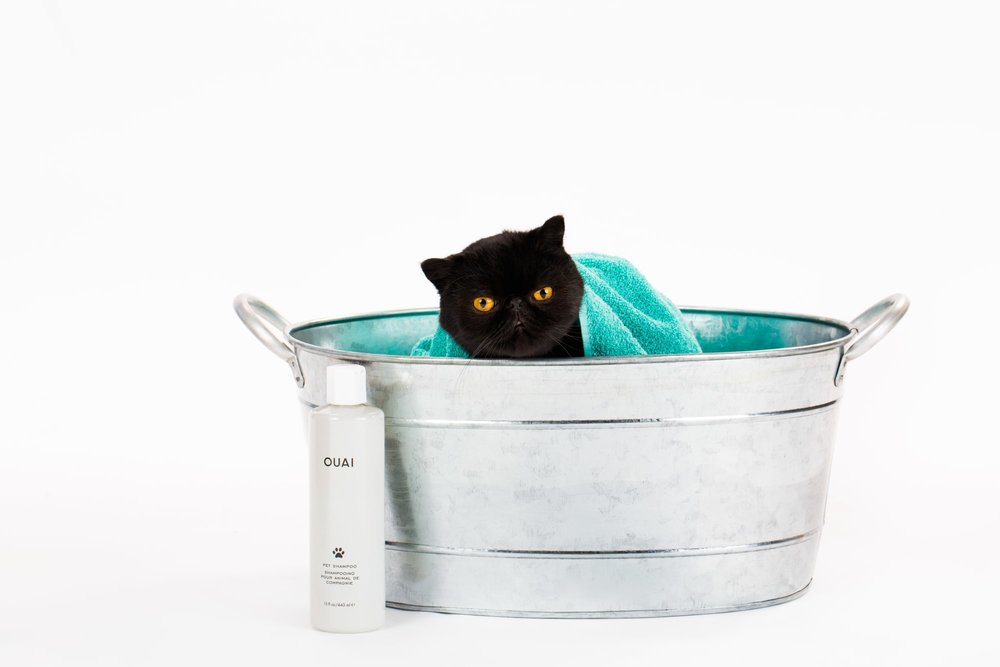 ouai pet shampoo black cat.jpg