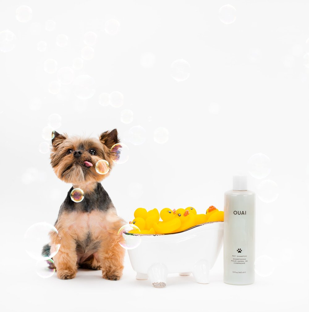ouai pet shampoo doggy 2.jpg