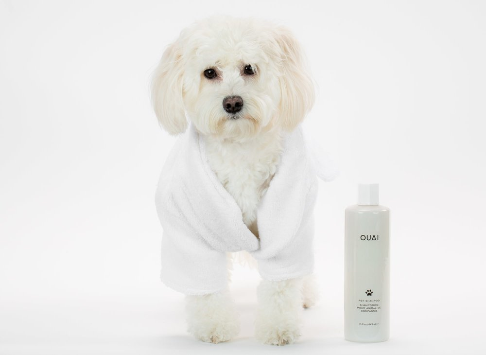 ouai pet shampoo doggy 4.jpg