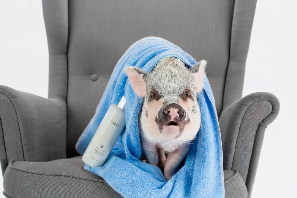 ouai pet shampoo pig.jpg
