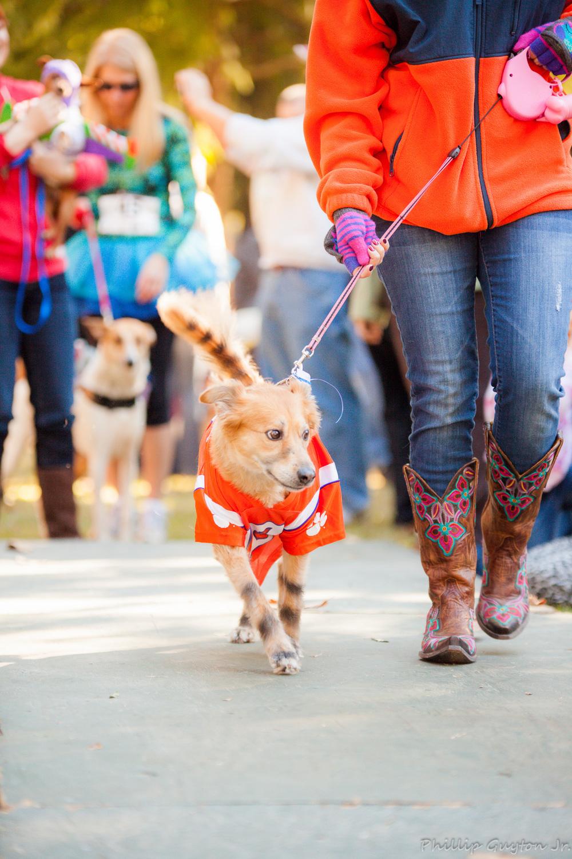On the Dogwalk